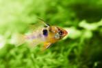 Ciclideakvarium :: Disse unikke og smukke akvarier giver et  hvert kontor landskab en fryd for øjet