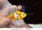 Saltvandsakvarie :: Disse unikke og smukke akvarier giver et hvert kontor landskab en fryd for øjet