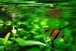 Selskabsakvarie :: Disse unikke  og smukke akvarier giver et  hvert kontor landskab en fryd for øjet